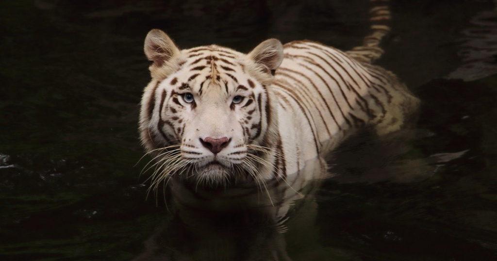 photographier la faune sauvage