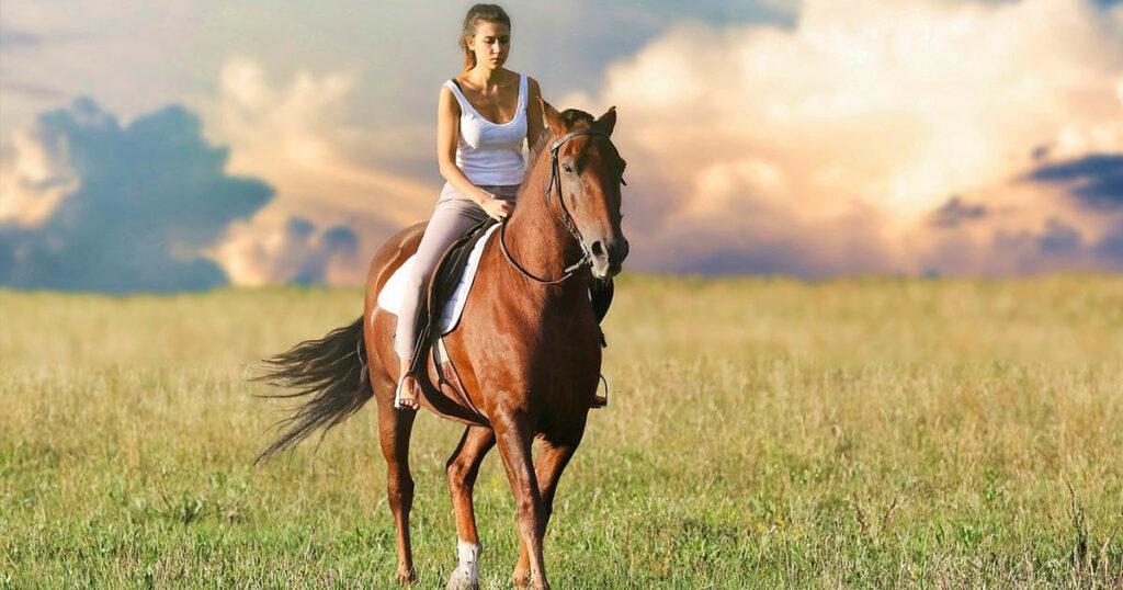 comment entretenir un cheval